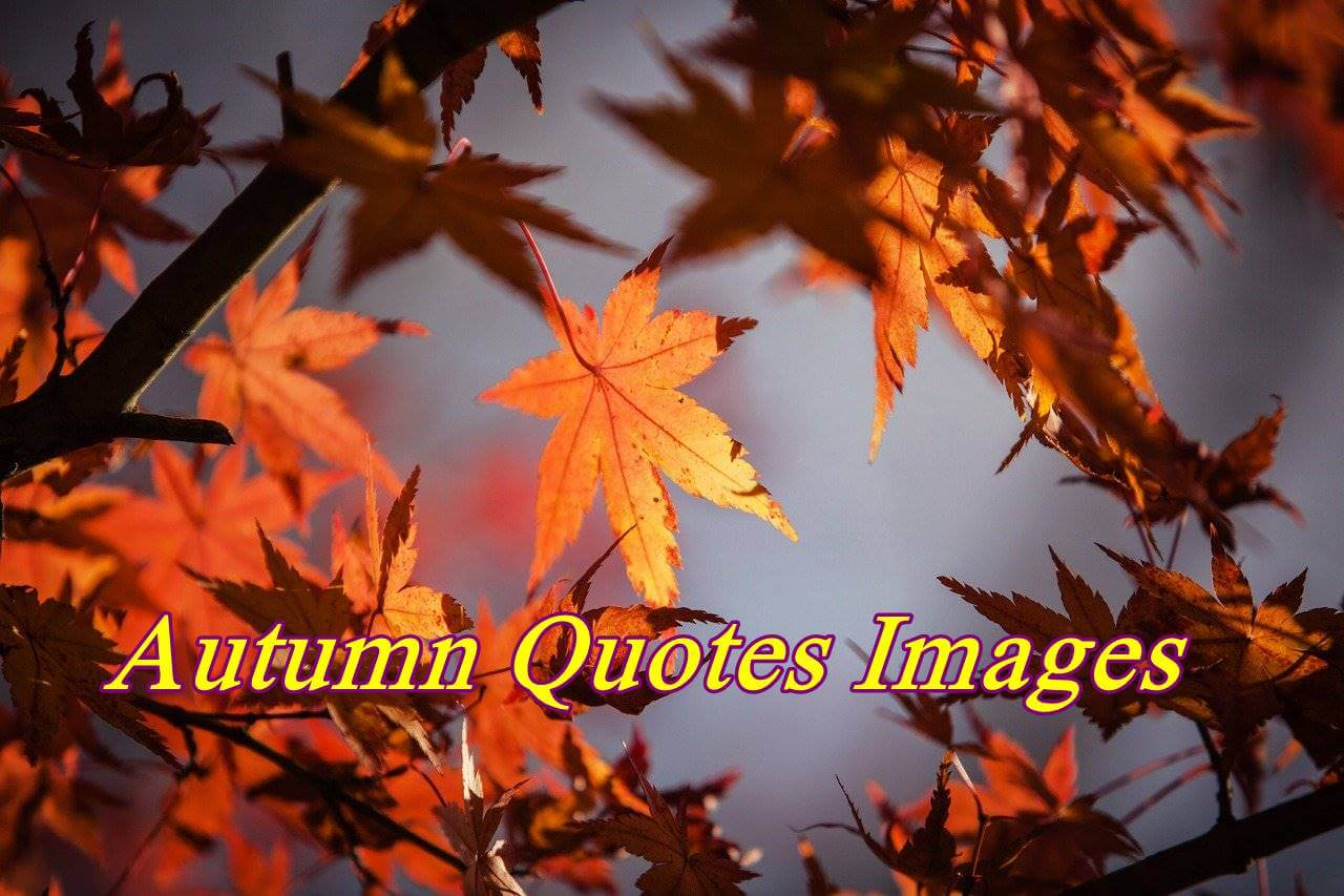 Autumn Quotes Images