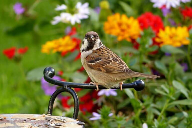 World Sparrow Day Quotes and Messages